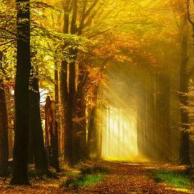 Herfst Herinneringen von Lars van de Goor