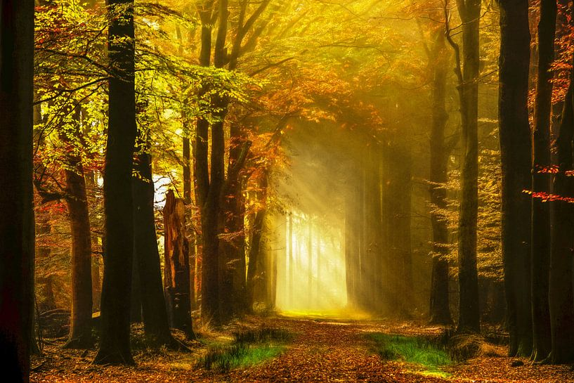 Herfst Herinneringen van Lars van de Goor