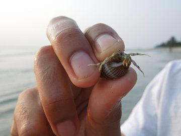 Krab in Maleisië  van Lin McQueen