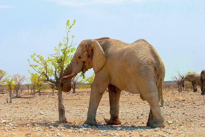 African elephant eat fresh leaves, Namibia. sur Inge Hogenbijl