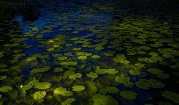 Waterlelies van tim eshuis
