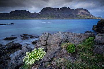 Flora des Fjordes von Sam Mannaerts Natuurfotografie
