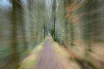 Im Wald von Haaije Bruinsma Fotografie