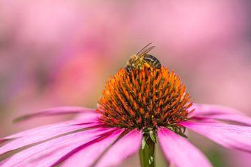 Biene mit rosa Sonnenhut von John van de Gazelle