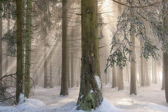 Winter Wonderen van Lars van de Goor
