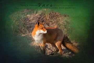Fuchs im spätsommerlichen Sonnenlicht von Carla van Zomeren