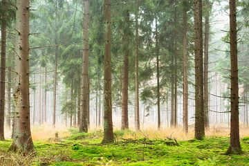 Mistige ochtend in het bos van Francis Dost