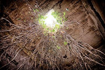 Licht aan het einde van de wortel van Rens Bok