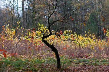 Herfst van Arno Photo