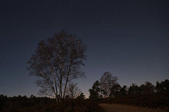 Dunkel Ruht die Heide