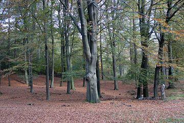Ein Blick in einen Buchenwald von whmpictures .com