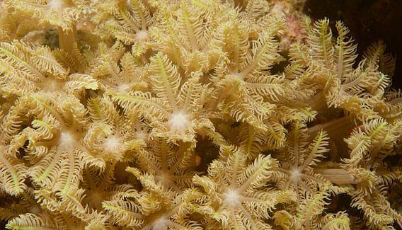 Zwierend koraal in de stroming