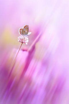 Delicate beauty van Bob Daalder