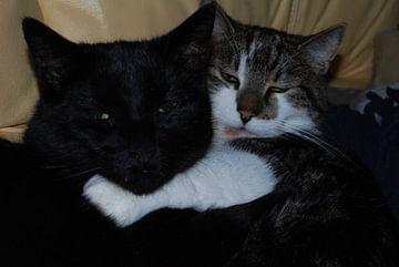 Katten von Jan Linschoten