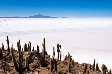 Cactuseiland sur Ronne Vinkx