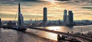 Skyline von Rotterdam in der Früh (Landschaft)