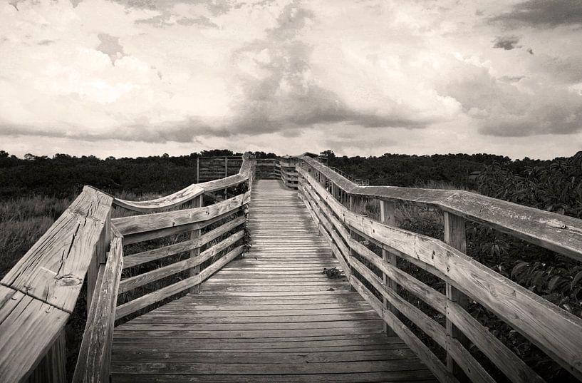 Path from the beach van juvani photo