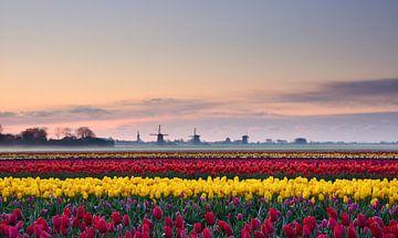 Tulpen bij zonsopkomst van John Leeninga