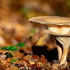 Pilze im Herbst von Dirk Rüter