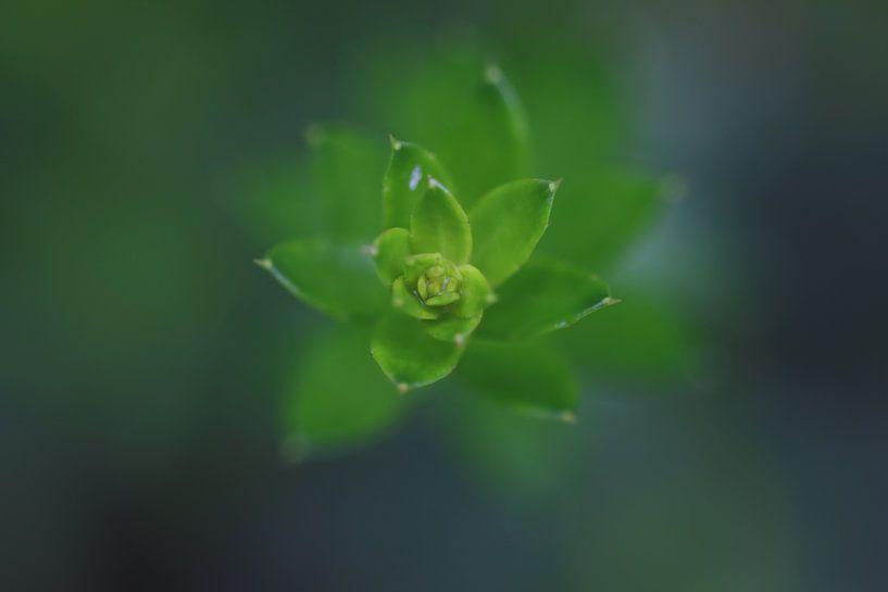 Makro von Kaktus von Paul Franke