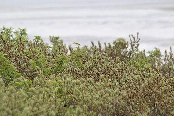 Mooie groen in de duinen van Lendy Fotografie .