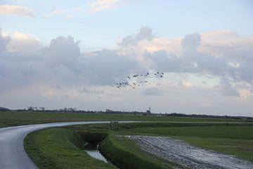 Texel Landschap 066 van Starworks Lien van der Star