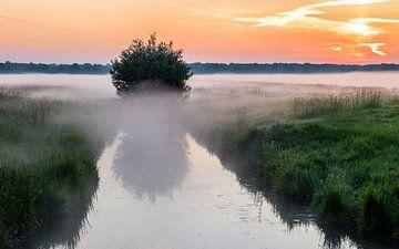 Morgennebel von Timo Bergenhenegouwen