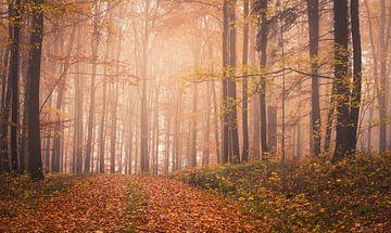 Mystiek bos in de herfst van Tobias Luxberg