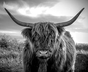 Schottischer Hochlandbewohner von inge drenth