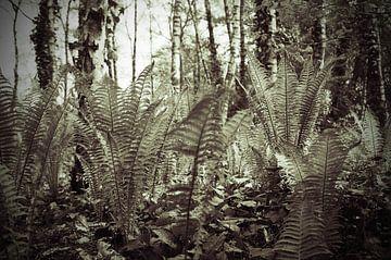 Varenbos in voorjaarszon van Anne Hana