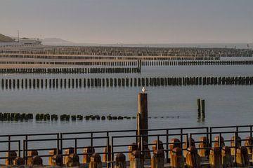 Paalhoofden op een Zeeuws strand van Marcel Klootwijk