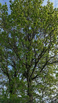 Baum am Wegesrand tree wood van Jenny Heß