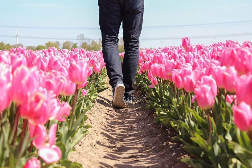 Lopen door een tulpenveld van Map of Joy