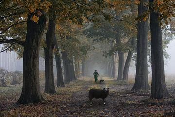 Eenzame schaapherder met zwart schaap von Tejo Coen