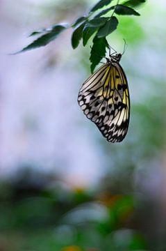 Macro - Vlinder sur Angelique Brunas