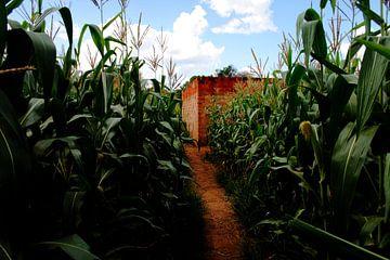Pad door maisveld in Afrika van Martijn Koevoets