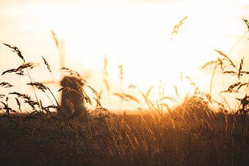 De Nederlandse polder in het Gouden Uur van Tes Kuilboer