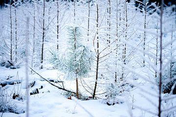 Kiefer in einem Winterwald von Karijn Seldam