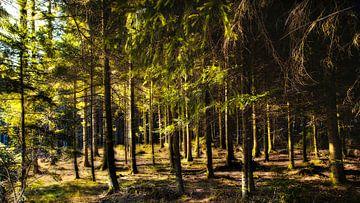 Fairytale Schwarzwald Deutschland von Anouschka Hendriks