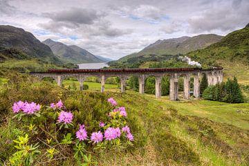 Glenfinnan Viaduct with steam train sur