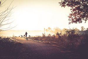 Mistige ochtend in de herfst van