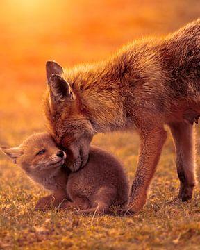 Intimer Moment zwischen Mutter Fox und ihrem Jungen bei Sonnenuntergang von Patrick van Bakkum