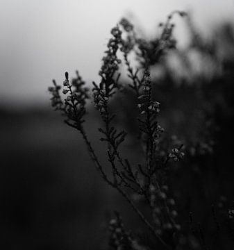 schwarz und weiß flora von Mats van Leuken