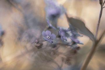 Blumen Teil 92 von Tania Perneel