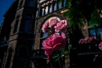 Roze bloemen met prachtige achtergrondgevel  von Jolien Luyten