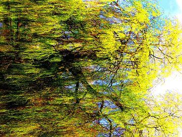 Tree Magic 151 van MoArt (Maurice Heuts)