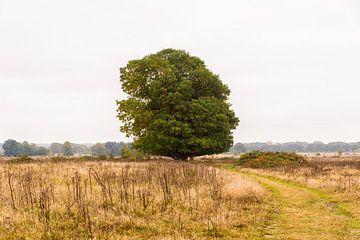 Majesteuze boom op de Plantage Willem III van Richard Bremer