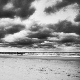paard sulky op het strand van eric van der eijk