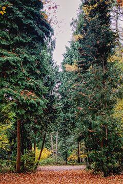 Doorkijkje tussen de dennenbomen van Anne Raafs