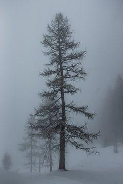Larix in einer Schneelandschaft mit Nebel von Arthur Puls Photography